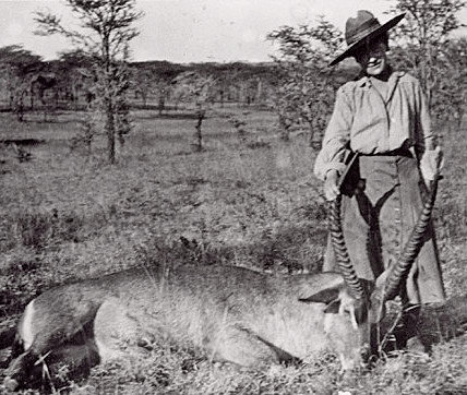 Cardeza a caccia