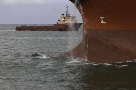 Lou Vest e le fotografie ai delfini
