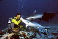 Marco Eletti mentre bacia uno squalo