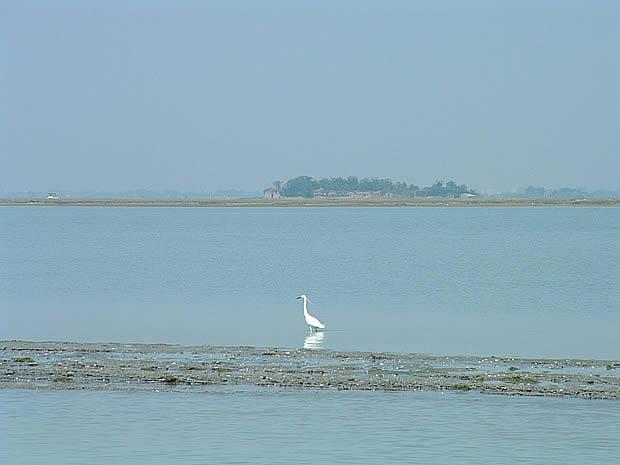 Airone nella Laguna di Venezia