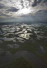 everglades-large