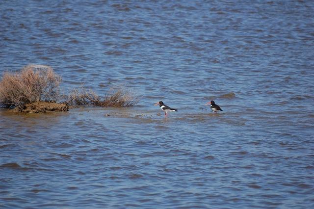 fauna del Parco del Delta del Po